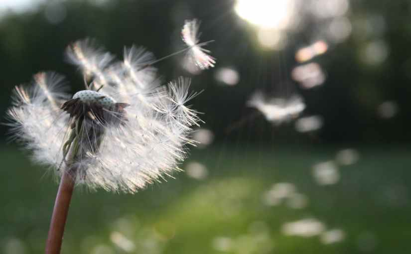 Dust in thewind…